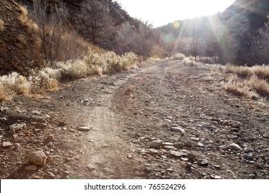 Sun beams over horse gulch trail in Durango, Colorado
