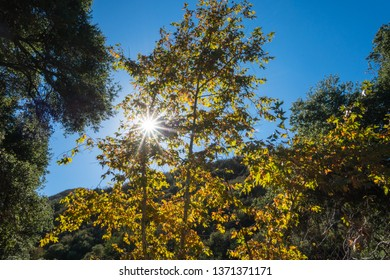Sun beams shine brightly through the leaves of a tall tree.