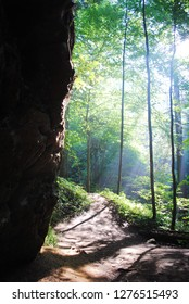 Sun beams shine through the vibrant lush green trees and onto a brown hiking dirt trail which leads the viewer deeper into the dense forest along side a large rock face