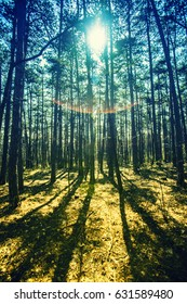 sun beams in spring forest