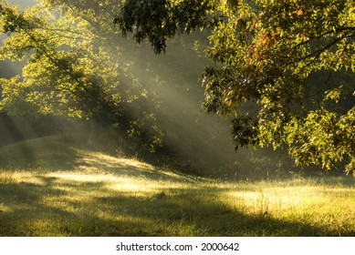 Sun beams through the fog through the trees in rural Tennessee