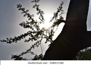 Sun behind from tree (sunkissed tree)
