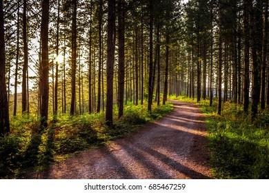 Sun between forest