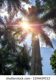 Sun between palm trees. Low angle view