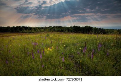 Sun bursts through clouds at twilight and sends rays downward onto prairie wildflowers. Shoefactory Nature Preserve, Illinois.