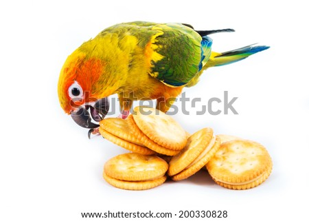 Sun Conure Bird Cracker Stock Photo Edit Now 200330828 Shutterstock