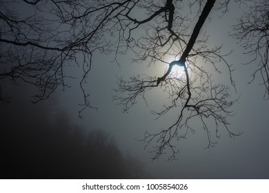 Sun in the dense fog