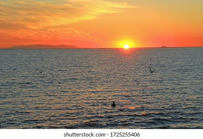 Sun dipping into ocean as it sets, Catalina island in background, boat on water, person in silhouette in water and bird flying.