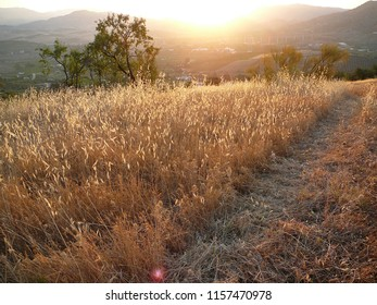 Sun dried field of grass and weeds at dawn in Andalusian Countryside