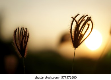 The sun, the evening sunlight before dark.