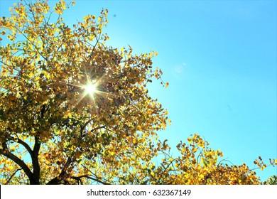 Sun filtered through yellow cottonwood branches. Rio Grande Valley State Park, Albuquerque, New Mexico.
