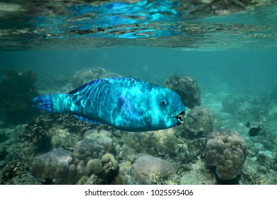 Sun Filtering through the Water and Reflecting on a Blue Fish Swimming close to the Surface in the Indian Ocean, Maldives