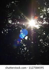 sun flare under the tree