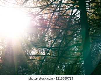 Sun flares during bare branches of trees. Forest with sunflares. Huggie, travel, holiday concept. Copy space for text