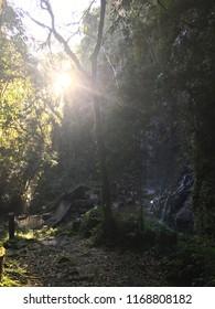 Sun in florest