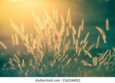Sun and flower,grass background light sunlight sunrise morning