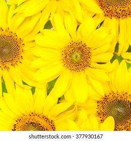 sun flowers tiles background.