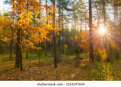 Sun in forest. Autumn nature. Environment clearance. Sun with sun rays in fall forest. Vibrant autumn background.