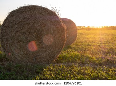 sun glare on the lens in the summer evening in the foreground compressed hay roll in the open air, hay harvesting