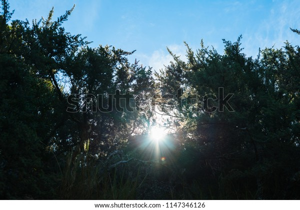 Sun glaring through leaves with clear sky