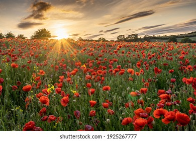 The sun goes down on a field of poppies in County Durham