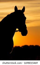 The sun goes down over a farm and a horsebackriding