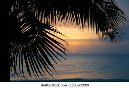 The sun goes down with a palm tree in the foreground.
