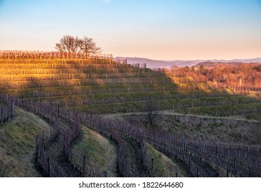 The sun goes down in the vineyards of Friuli Venezia-Giulia