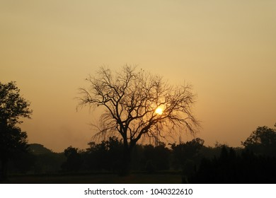 The sun has early in the morning got confused in tree branches