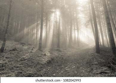 the sun inside a woods in a foggy day