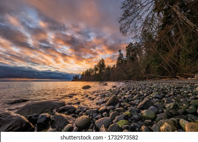 The sun is just about to rise behind the trees at seal bay in the Comox Valley.