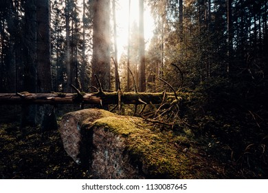 Sun light hits the moss-covered stone in the forest