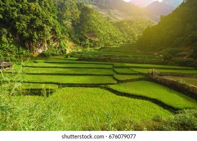 Sun light on Green Terraced Rice Field in Mai Chau District, Vietnam. Vietnam landscapes.