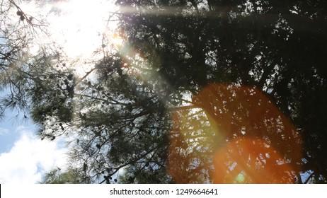 Sun light reflections and trees/Belek,Antalya-TURKEY
