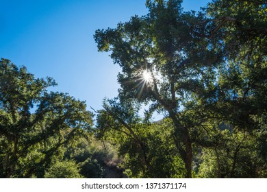 Sun light shines through tall tree branches and leaves.