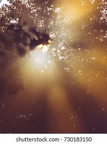 Sun light through branches