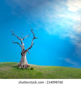 Sun light through clouds and big old dead tree mystical creative concept background