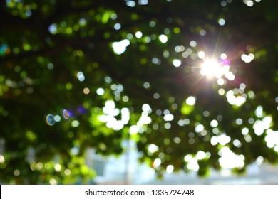 sun light through green tree in summer morning, image blur background