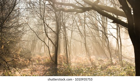 sun lighting up fog in a forest,