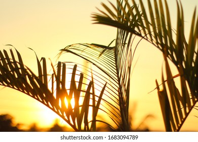 Sun lights reflected on palm tree leaves at sunset.