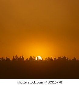 The sun in the mist over the treetops.