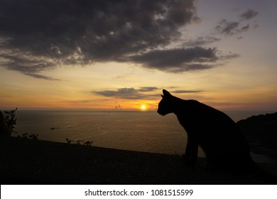 Sun on the edge of the sea with a cat silhouette climb the wall.