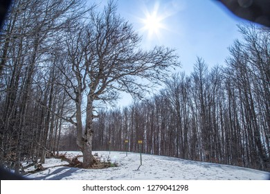 The sun on top of the trees in the Navarrese Pyrenees in Spain