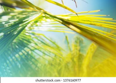 Sun over green palm leaves against blue sky