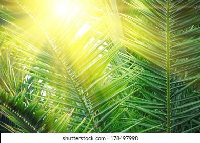 Sonne auf grünen Palmenblättern