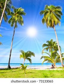 Sun and palm trees on the beach
