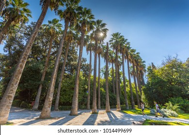 Sun peaking through tall palm trees in the National Gardens, Athens, Greece, Europe 10 October 2017