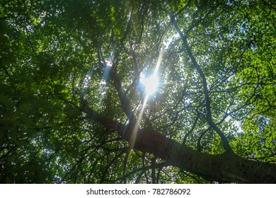 Sun Peaking Through Trees