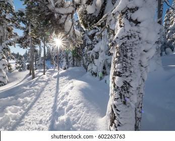 The sun peaking through the trees while hiking through Mount Washington, British Columbia, Canada