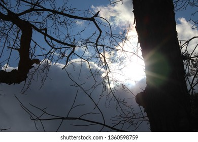 sun peeking from behind a tree trunk and gray and white billowy clouds and branches along side with blue sky